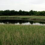 Ridgewood Reservoir, Queens